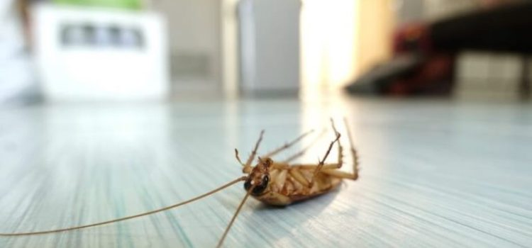 Bothersome Bugs: 5 Pro Tips for How to Keep Bugs Out of Your House